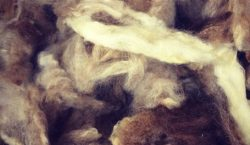 2s-scoured-oatmeal-tasman-545x510